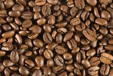 Free Closeup Of Coffee Beans Royalty Free Stock Images - 6269439