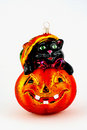 Free Cat In Pumpkin Royalty Free Stock Photo - 6270015