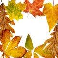 Free Autumn Frame Royalty Free Stock Image - 6271856