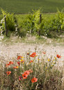 Free TUSCANY Countryside, Close-up Of Poppy-flower Royalty Free Stock Images - 6272849