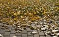 Free Brick Path, Grass, Autumn Leaves Stock Photos - 6279673