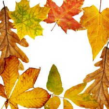 Free Autumn Frame Royalty Free Stock Image - 6271856