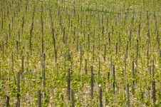 Free Tuscany Royalty Free Stock Photos - 6271958