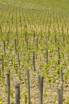 Free Tuscany Royalty Free Stock Images - 6272029