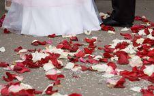 Free Petals Of Roses At Feet Royalty Free Stock Photo - 6272605