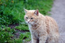 Free Red Green-eyed Cat Stock Images - 6273254