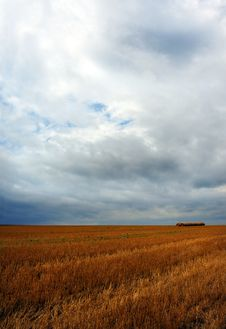 Free Wheat Field Royalty Free Stock Photos - 6273668