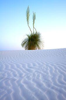 Desert Plant In The Early Sun Stock Photos