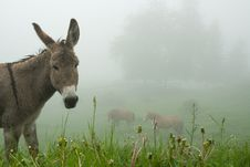 Free Donkey In The Fog Stock Photos - 6274163