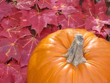 Free Pumpkin With Colorful Leaves Stock Image - 6274761