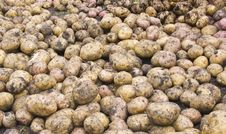 Free Potato Stock Image - 6276461