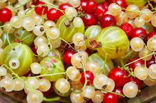 Free Currants Stock Images - 6277294