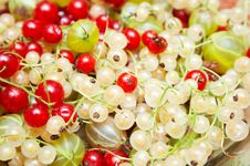 Free Currants Royalty Free Stock Images - 6277299