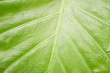 Free Green Leaf Stock Photos - 6277333
