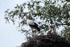 Free Storks-nest Royalty Free Stock Photography - 6277697