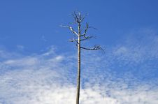 Free Lonely Tree On A Background Of The Blue Sky Royalty Free Stock Photography - 6278927