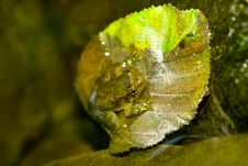 Free Tiny Frog On Leaf Stock Images - 6279294