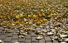 Brick Path, Grass, Autumn Leaves