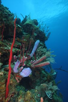 Free Coral Reef Stock Photography - 6279952