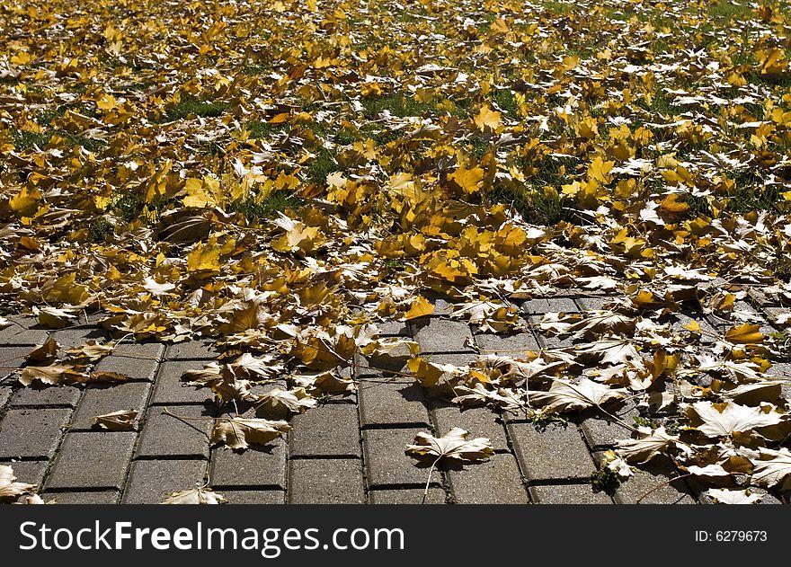 Brick Path, Grass, Autumn Leaves