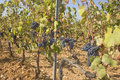 Free Vineyard Stock Photos - 6281833