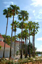 Free Palm Trees Royalty Free Stock Images - 6283609