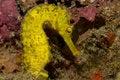 Free Seahorse Stock Photos - 6284943