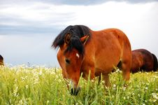 Free Horse Stock Photography - 6280032