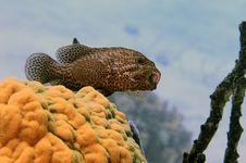 Free Grouper Stock Photos - 6280383