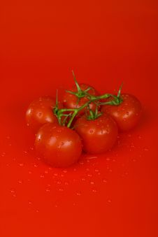 Free Branch Of Tomatoes Stock Image - 6280551