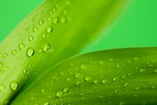 Free Leaves Of Bamboo Stock Photo - 6280570