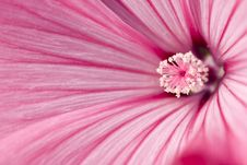 Free Tenderness Of Pink Flower Stock Photos - 6280583