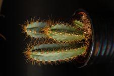 Free Cactus Stock Images - 6280834