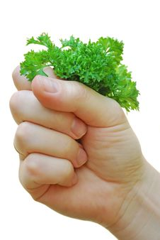 Free Hand Holds The Bunch Of Greenery Royalty Free Stock Photo - 6281055