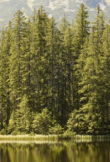 Free Forest Edge Stock Photography - 6282152