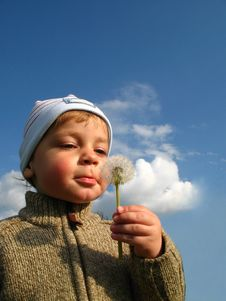 Little Boy Blow Blowball Royalty Free Stock Photography