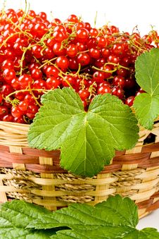 Free Red Currant Royalty Free Stock Photos - 6283628
