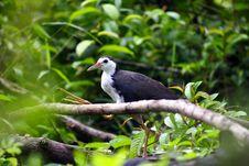 Free Bird Royalty Free Stock Images - 6285069