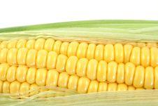 Free Yellow Corn Royalty Free Stock Photo - 6285715