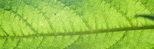 Free Green Leaf Texture Stock Photography - 6286222
