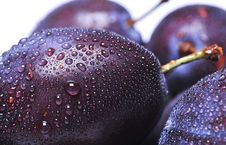 Free Plums Royalty Free Stock Image - 6286546