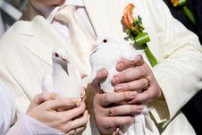 Free Two White Pigeons Stock Image - 6287281