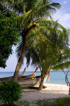 Free Coco Palms On The Beach Royalty Free Stock Photo - 6288185