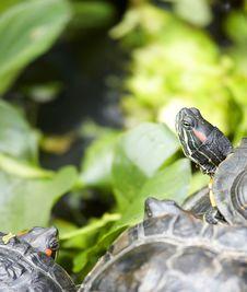 Free Tortoise Stock Image - 6288431