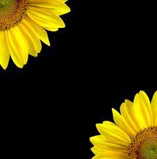 Free Illustration Image Of Sunflowers Stock Images - 6288704