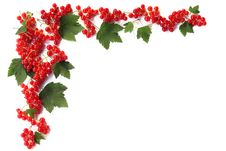Free Red Currants Royalty Free Stock Photos - 6288898