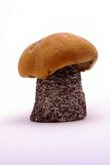 Free Fresh Boletus Mushroom Royalty Free Stock Image - 6289226