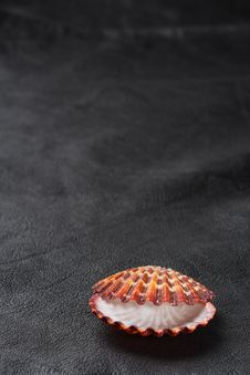 Free Seashell Sea Shell On Old Black Leather Background Stock Photography - 6289542