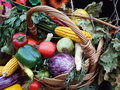 Free Rural Eco Vegetables View In September Season Royalty Free Stock Photo - 62805135