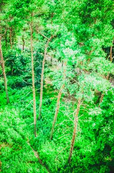 Free View On Top Of A Large Pine Forest Stock Photos - 62878153